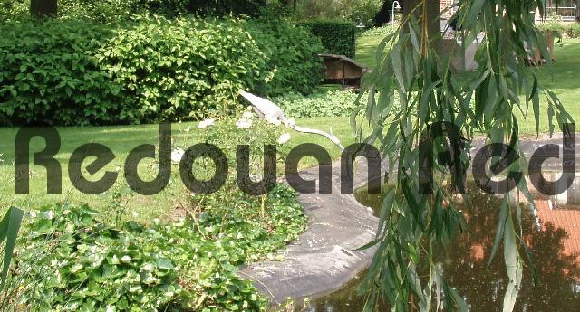 Product picture Blue heron statue at a pond in the backyard