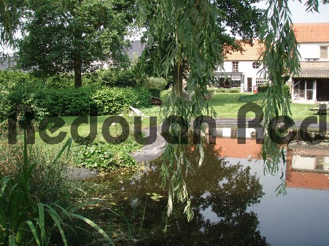Product picture Weeping willow branches hanging over a pond in an Antwerp ga